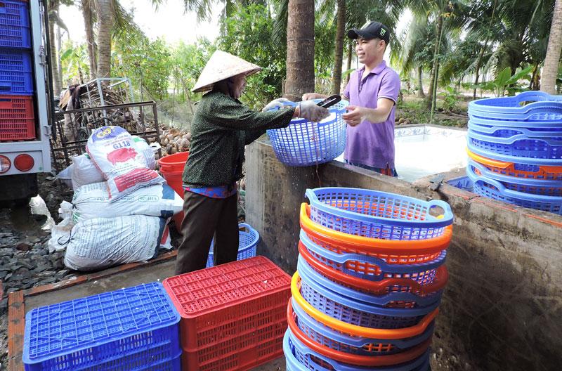 Hợp tác xã nông nghiệp xã Thới Lai, huyện Bình Đại. Ảnh: P. Tuyết