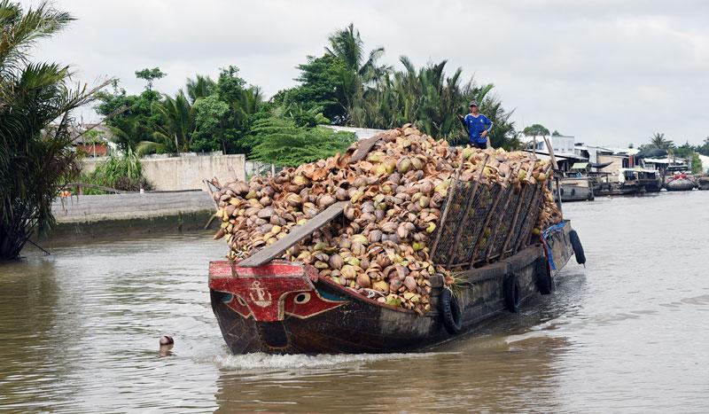 Hoạt động vận chuyển, mua bán dừa trên sông Thom là điểm nhấn hấp dẫn khi du lịch Mỏ Cày Nam. Ảnh: Thanh Đồng