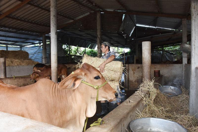 Tập trung nguồn vốn phục vụ phát triển kinh tế nông nghiệp.