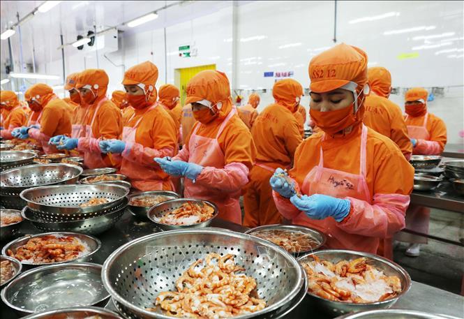 Chế biến tôm xuất khẩu tôm của Công ty TNHH Thông Thuận-Chi nhánh Ninh Thuận. Ảnh: Công Thử