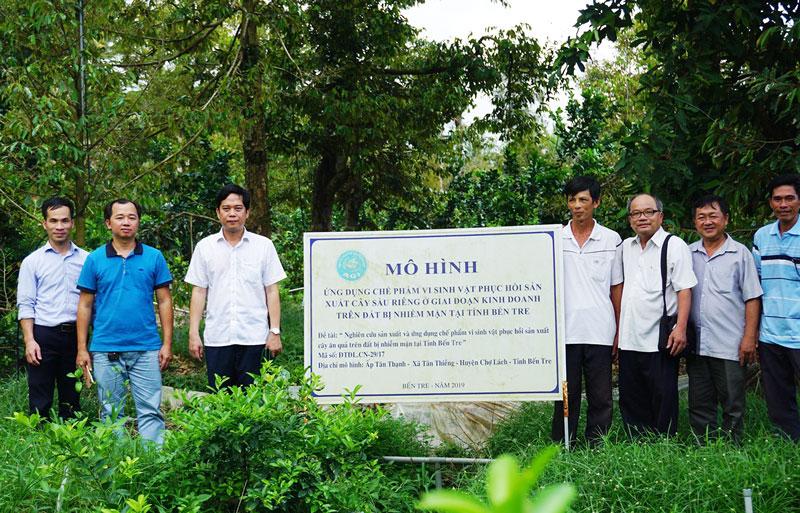 Kiểm tra mô hình ứng dụng chế phẩm vi sinh vật phục hồi sản xuất cây ăn trái trên đất bị nhiễm mặn. Ảnh: X. Trang