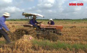 Ba Tri thu hoạch lúa