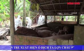 Bến Tre xuất hiện ổ dịch tả lợn châu Phi
