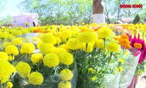 Rộn ràng chợ hoa xuân Bến Tre