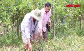 Vườn cây thiệt hại nặng nề do hạn mặn