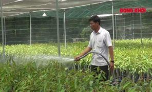 Chợ Lách chủ động trữ nước ngọt bảo vệ vườn cây ăn trái, cây giống