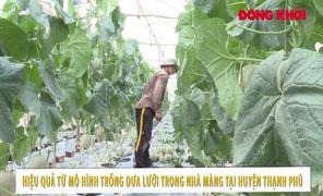 Mô hình trồng dưa lưới trong nhà màng ở Thạnh Phú