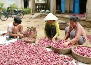 An Hòa Tây: Trúng mùa hàng bông