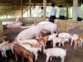 Đẩy mạnh công tác phòng, chống dịch bệnh trên gia súc, gia cầm trong dịp Tết