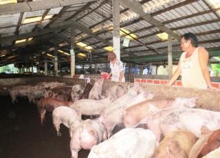 Chăn nuôi heo theo hướng bền vững, đảm bảo môi trường