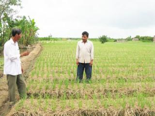 Hiệu quả từ Tổ hợp tác sản xuất rau an toàn xã Tân Thủy
