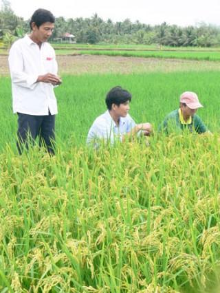 Chính sách hỗ trợ giống cây trồng, vật nuôi, thủy sản đối với vùng bị thiên tai, dịch bệnh