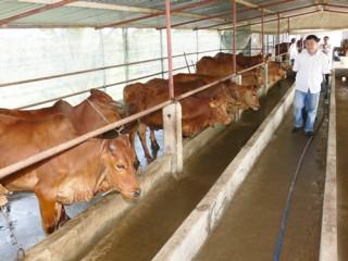 Tập trung phát triển sản xuất, nâng cao đời sống người dân nông thôn