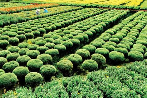 Nông nghiệp với niềm vui được mùa