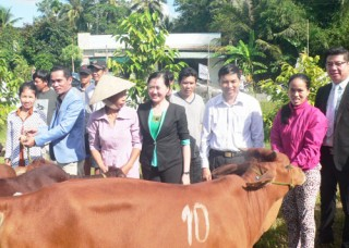 Trao tặng 50 bò giống cho hộ nghèo ở xã Tân Phú Tây