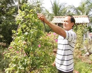 Thu nhập khá nhờ trồng hoa kiểng