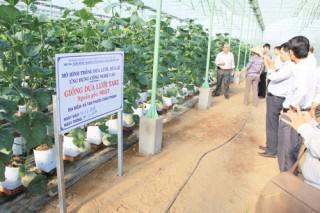 Hội thảo mô hình trồng dưa lưới, dưa lê trong nhà màng