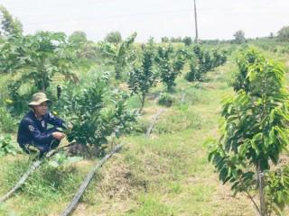 Tập trung chuyển đổi cây trồng, vật nuôi