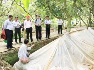 Đoàn nghiên cứu Myanmar tham quan mô hình nông nghiệp tại Bến Tre