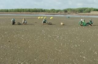 Nghêu chết hàng loạt tại Hợp tác xã Thủy sản Đồng Tâm