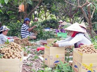 Giữ vững chất lượng nông sản an toàn