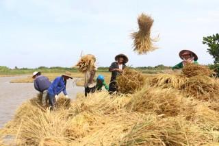 Góp phần tích cực trong tái cơ cấu nông nghiệp