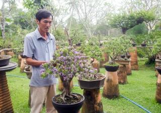 Chợ Lách: Sản xuất kiểng bonsai hiệu quả kinh tế cao