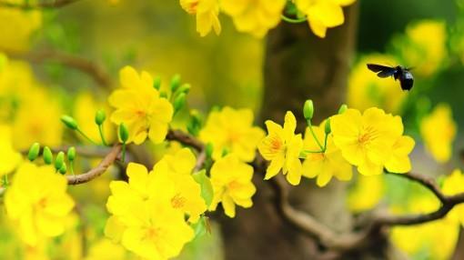 Mùa xuân đồng vọng tiếng quê hương