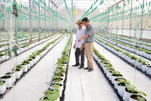 Ngành nông nghiệp trước xu hướng sản xuất hữu cơ