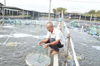 Nông dân Ba Sấm: Đột phá với mô hình nuôi tôm biển công nghệ cao