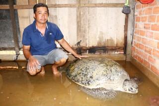 Thả rùa biển khoảng 200 kg về với tự nhiên