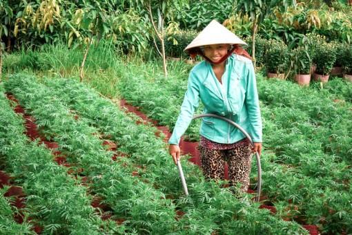 Chợ Lách: 90 lao động đi làm việc ở nước ngoài
