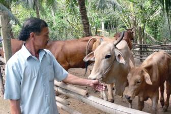 Mở rộng dự án phát triển đàn bò sữa Bến Tre