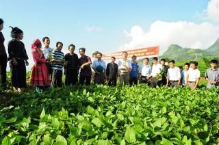 Nhiều chính sách khuyến khích doanh nghiệp đầu tư vào nông nghiệp, nông thôn