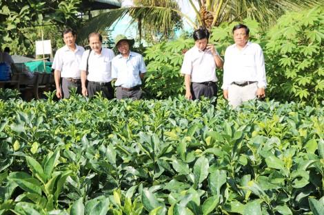 Chợ Lách xây dựng cơ cấu cây trồng phù hợp điều kiện địa phương