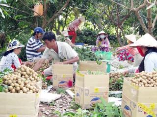 Bình Đại: Tập trung phát triển nông nghiệp, nông dân, nông thôn