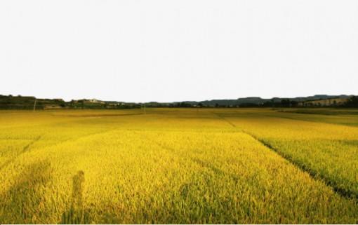 Điều chỉnh quy hoạch sử dụng đất của 13 tỉnh