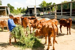 Liên kết sản xuất gắn với tiêu thụ nông sản chủ lực