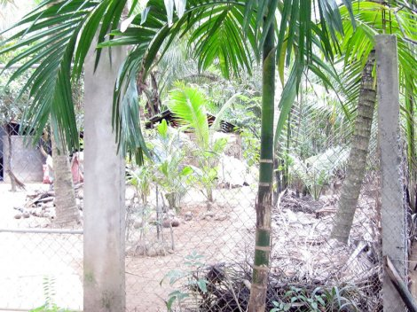 Cưỡng chế buộc tháo dỡ nhà tạm trên lối đi ở xã Bình Khánh Đông