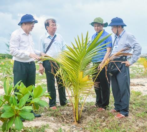 Sức sống cây dừa trên biển đảo quê hương