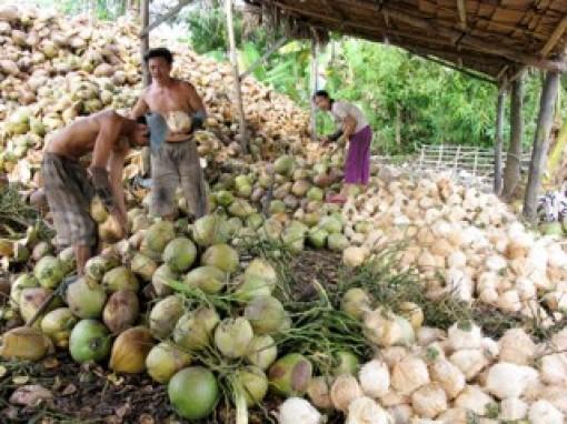 Giá dừa khô giảm sâu