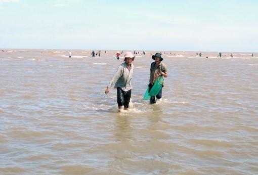 Nghề ươm sò giống giúp nhiều hộ dân có thu nhập khá