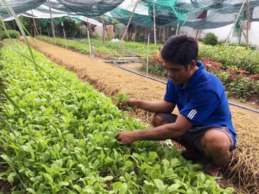 Ba Tri nhân rộng mô hình trồng rau hữu cơ