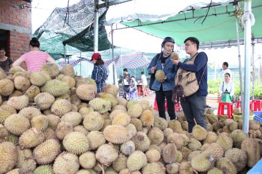 Chợ Lách xôn xao sầu riêng giá rẻ ăn trả hột