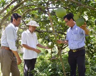 """""""Truyền cảm hứng"""" phát triển kinh tế hợp tác cho nông dân"""
