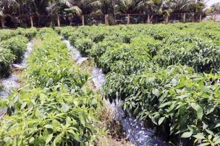 Nguy cơ ô nhiễm từ việc chôn cất trên đất nông nghiệp