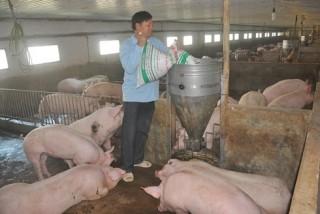 Thịt lợn tăng giá 200%, đắt nhất thế giới, Bộ ra công văn hỏa tốc