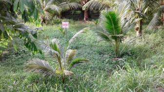Gặp khó khi chuyển nhượng đất sử dụng hợp pháp