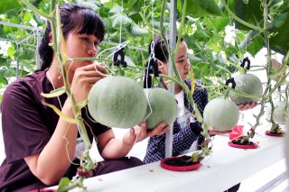 Chuyển giao công nghệ và liên kết tiêu thụ nông sản