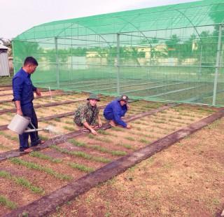 Vườn rau sạch ở các đại đội